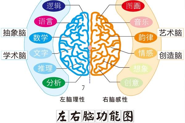 发展能力:专注、记忆、观察、创造、逻辑思维